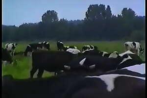 Kuh jungen